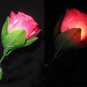 La Rose qui s'allume à volonté